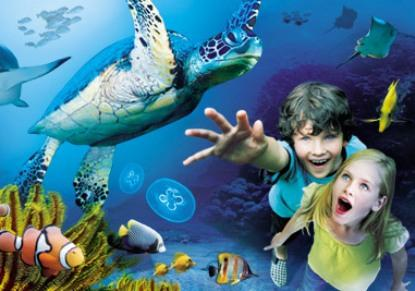 Sea Life London Special Offer Discount London Tours
