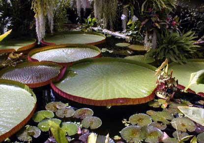 Kew Gardens & Kew Palace